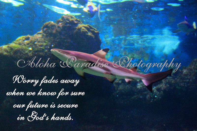 WORRY FADES, SHARK, MAUI OCEAN CENTER