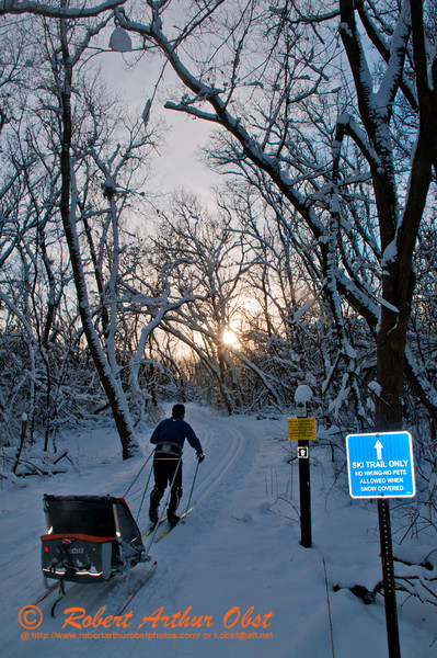 Dad pulling kid's ski trailer through a winter wonderland within Governor Nelson State Park (USA WI Waunakee; Obst FAV Photos 2013 Nikon D300s Sports Fun Extraordinaire Action Outdoors Cross Country Skiing Image 4533)