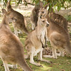 Reminds me of Stapylton Campground. Wet, cold and hungry kangaroos.