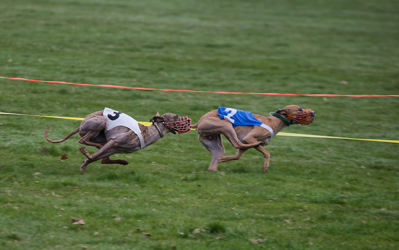 Bree (# 3) and Curlin (#2) race around the oval