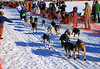 Matt Failor started racing while a handler for other mushers, but he now has his own kennel.