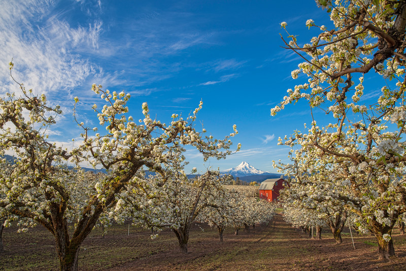 The Red Barn of the Hood River Valley