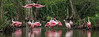 Roseate Spoonbill Convention
