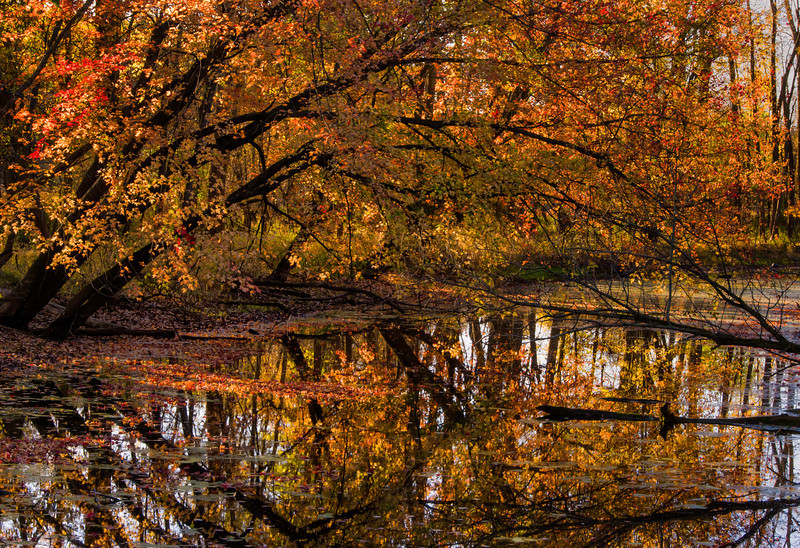 Bayou, Shiawassee National Wildlife Refuge in Fall
