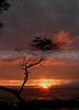 (Hawaii, Waikoloa) Another dramatic sunset on the Kona coast.  This is one of my favorites and I've framed this image for my own display and for others.  The silhouette of a gnarled tree adds a lot to this image.
