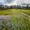 Let The Path Guide You - Mazama Ridge, Mount Rainier National Park, WA,