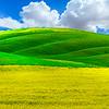 A Mix Of Colors - The Palouse, Eastern Washington