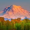 Mt Rainier Peaks Above The Treeline -Sumner, WA