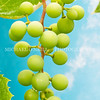 Grapes Ripening