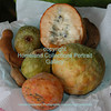 0002 Custard Apple - Tamarind