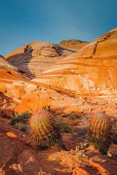 Cactus in the Valley of Fire