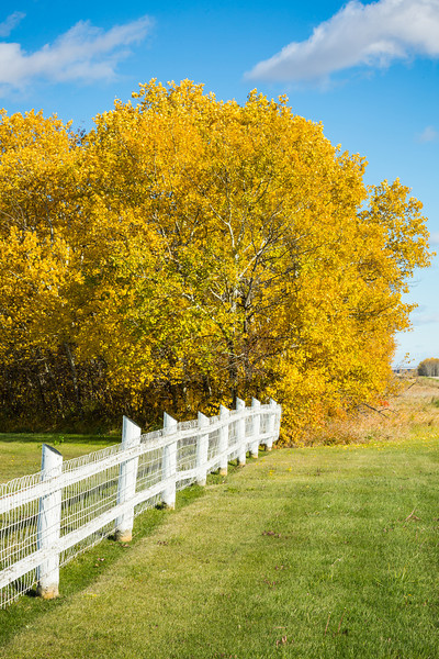 White Fence in Autumn