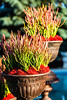 Potted Succulent Plants