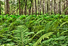 Natural Forest with Fern Plants