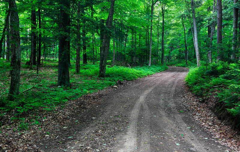 Backroads - Northern Highland American Legion State Forest (Wisconsin)