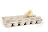 A baby chicken sits inside of an egg carton on a white background