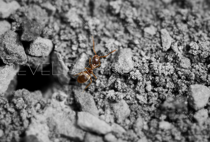 an above shot of an ant walking out of his hole