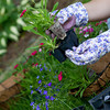 gardener pulls out annual flower from holder to plant in a wire hanging basket. focus on flower in hand.