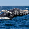 7 Seas Whale Watching - Gloucester, MA - August 5, 2014