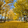 Yellow Autumn Tree path