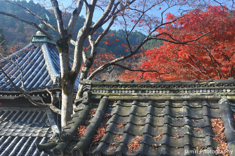 Roof Tops and Autumn Colour