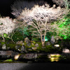 Lit Up Trees. In the gardens of Entokuin (a Zen Buddhist Temple in Kyoto) during the 2013 Hagashiyama Hanatouro.