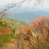 Spring Blooms and Mountain Views. From near the top of Mount Atago.