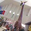 Giant Stuffed Toys. At a Hansa store in the Hankyu Department Store, Umeda, Osaka. That 4.82m tall giraffe costs almost 2 million yen (about $20,000AUD), but the question is does anyone have a house big enough in Japan to put it in?