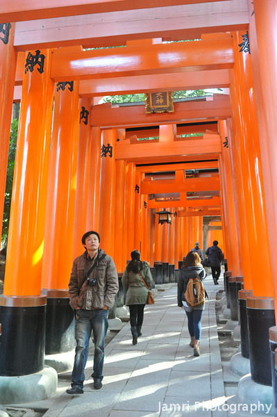 Wandering Amongst the Torii