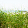Beach grasses wave in a summer breeze