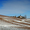 Winter vineyards