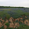 BLUEBONNETS AT MULSHOE DOLLY SHOT LEFT FLY UP AND 360 PAN