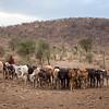 The Maasai Herder - Tanzania