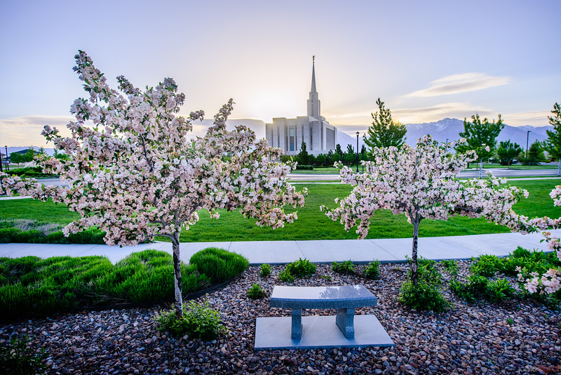 Oquirrh Mtn Temple Cherry Blossoms