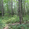 Fern glade view #2<br /> Bullett Creek Trail #121<br /> Starr Mtn TN
