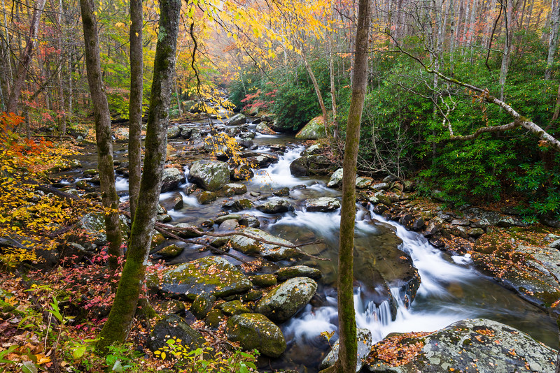 GSM 056    Autumn on the Middle Prong of the Little River in the Appalachian Mountains, Great Smoky Mountains National Park, Tennessee.