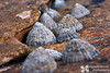On the Moray Coast, near Hopeman, a gaggle of photographers wandered around taking pictures, including this one. Little did we know that was the first of many trips we'd make together. These limpets, lined up and coming into focus make me think of that group of budding landscape photographers, starting to find our focus in the landscapes of Scotland.