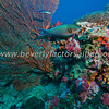 Richelieu Rock - Thailand - Dive 11_0725
