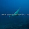 Thailand, Similan Islands - Koh Bon -_0927