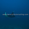 Thailand, Similan Islands - Koh Bon -_0929