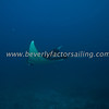 Thailand, Similan Islands - Koh Bon -_0928
