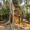 Tree and Stone, Ta Prohm, Angkor