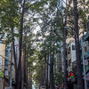 Tree-Lined Street, Saigon