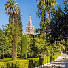 La Giralda from the Gardens of the Alcazar, Seville