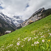 Hillside Meadow, Gimmelwald, Switzerland