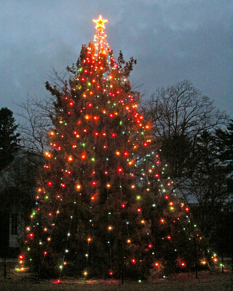 Christmas tree at Planting Fields Arboretum