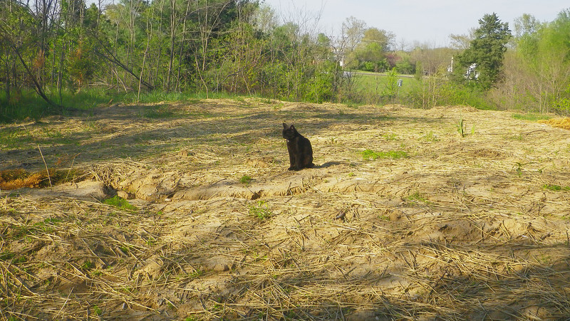 top of north field, the part that will be the tai chi area behind a grove of pines and spruce.