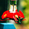 Ruby-throated Hummingbird - Oct. 1998