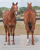 Eddie Woods Barretts Mar 2yo 2014, 2/11/2014 Eddie Woods OBS March 2yos 2014;291obsm14_Pulpit-My Magic Moment 12c