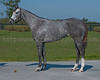 Y-Lo Racing Stable' WICKEDLY PERFECT (Congrats-Wickedly Wise 2008 filly prior to OBS April 2010 2yo Sale